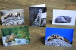 Greeting Cards_1